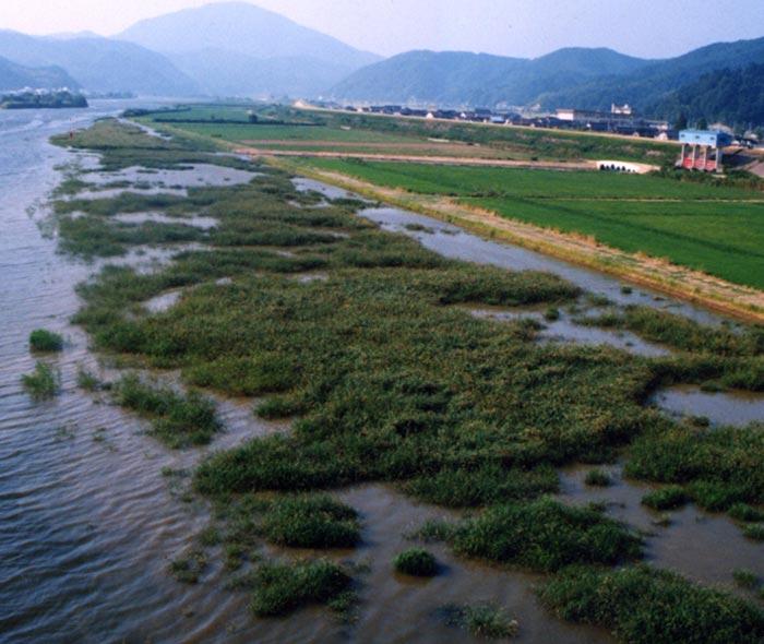 The Konotori's river biotope, the Maruyama river