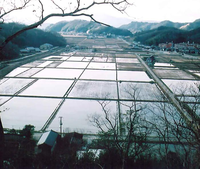 Winter-flooded rice paddies