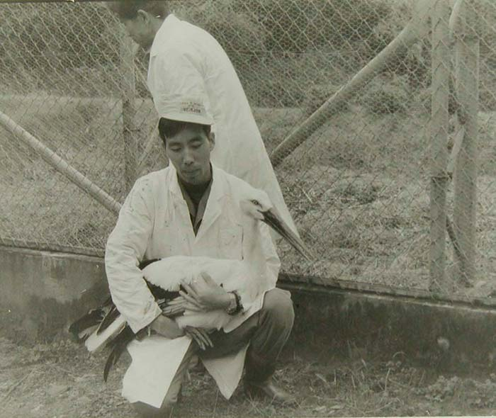 Konotori stork being held by a conservationist